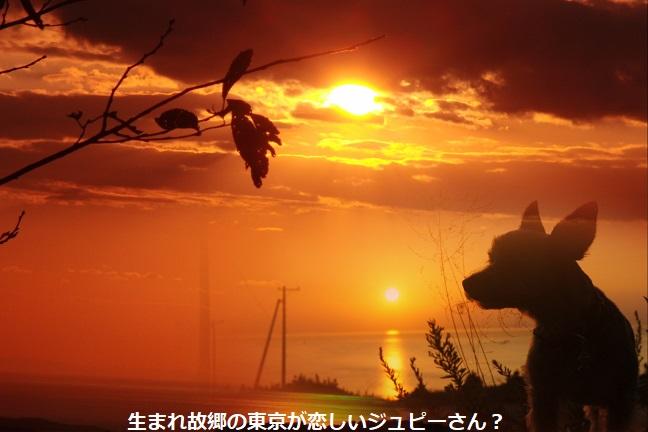 コスモスー8.jpg